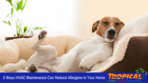5 Ways HVAC Maintenance Can Reduce Allergens in Your Home